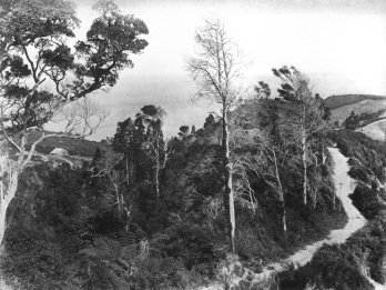 Early road, Titirangi.,Unknown, photographer