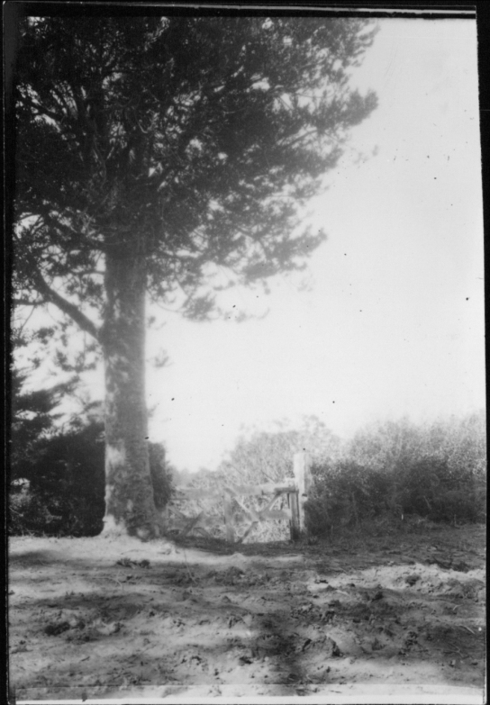 View from Titirangi.,Garlick, Una, 1883-1951, photographer,PH-NEG-14035